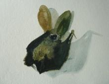Natural History Study: Ketteringham Bat