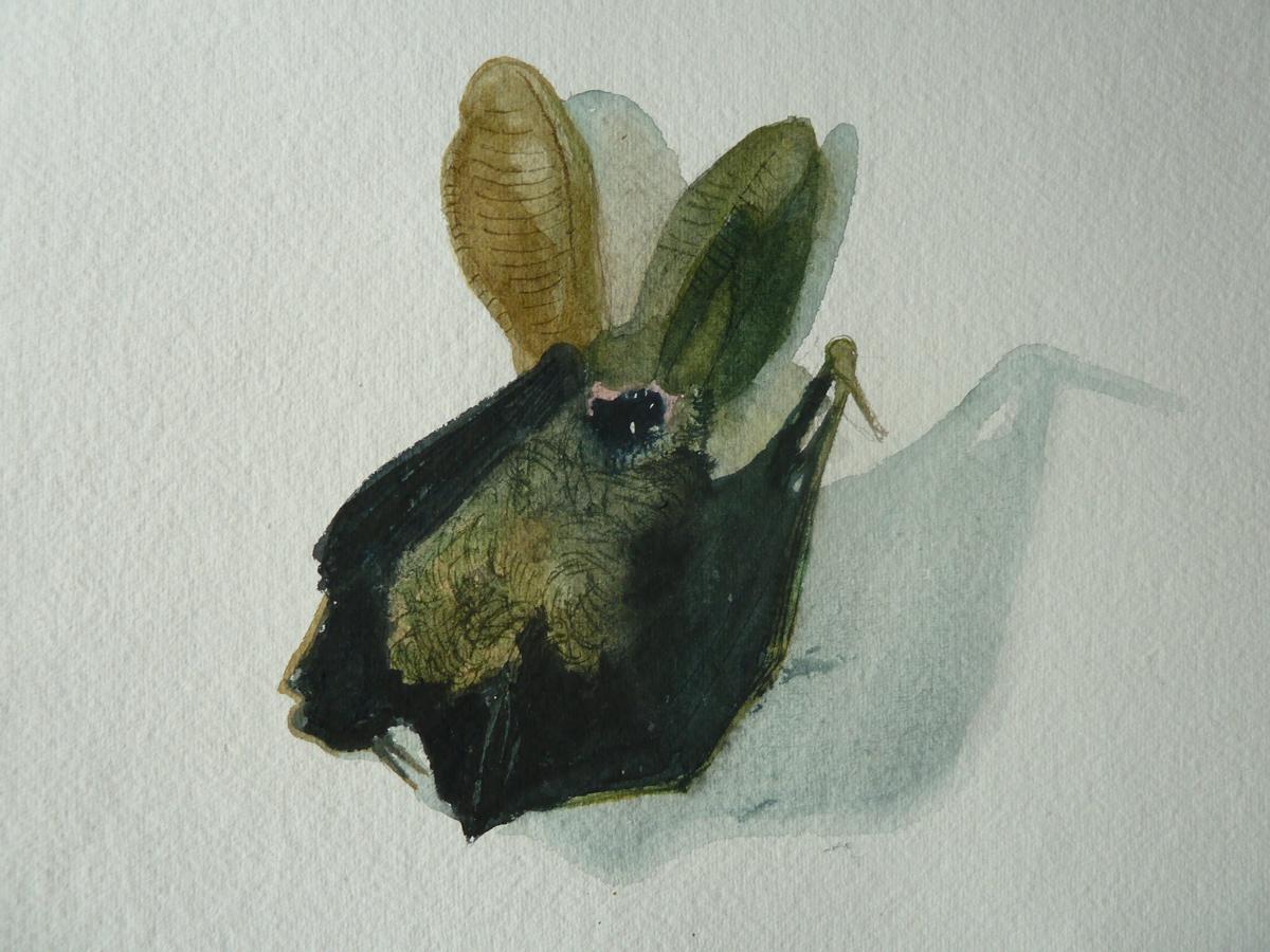 Natural History Study: Ketteringham bat'
