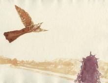 Cuckoo Over Glanrhyd