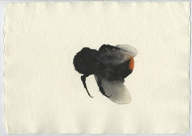 Norfolk Bee 1