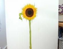 Flower study (Sunflower)4