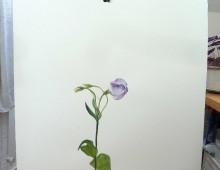 Flower study2