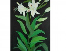 Flower study (Lillies) 03