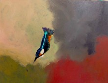 Study of a Kingfisher (diving)