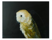 Study of a Barn Owl