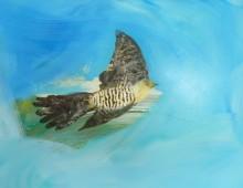 Study of a Cuckoo
